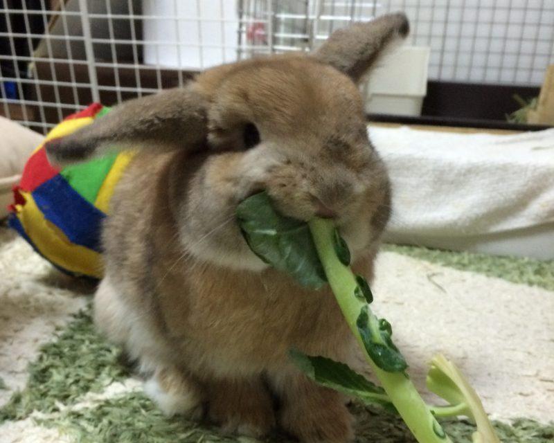 うさぎが食べる雑草を実際に食べてみた