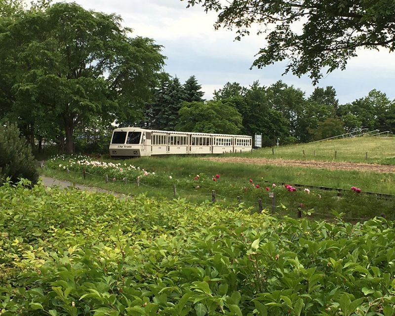 百合が原公園の電車